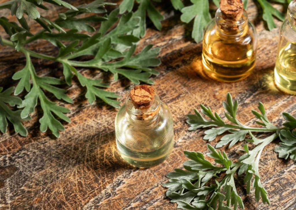 Artemisia annua, Artemisinin, Artesunate, sweet wormwood - efficacy, safety, dosage, benefits, side-effects in cancer