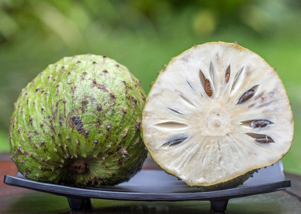 Graviola/Soursop for Cancer Cure, benefits, side-effects