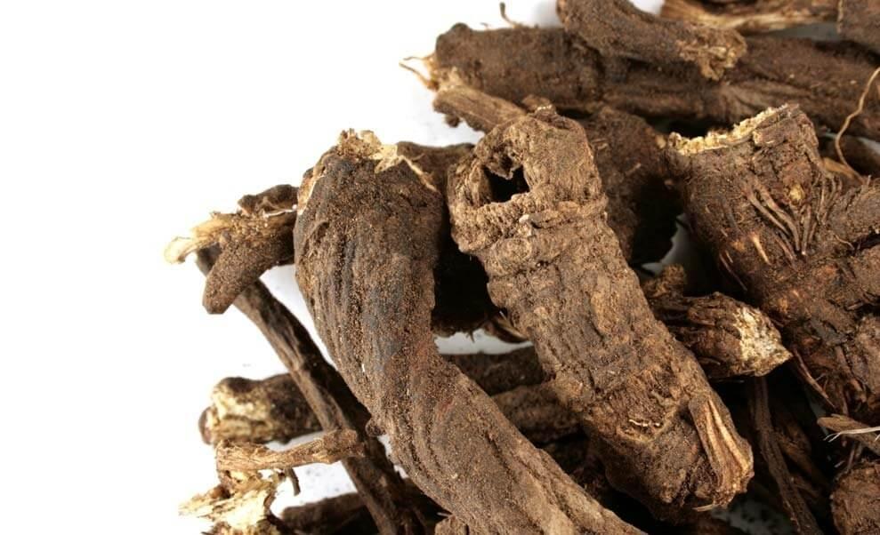Ligustilide, osha root benefits/uses in cancer