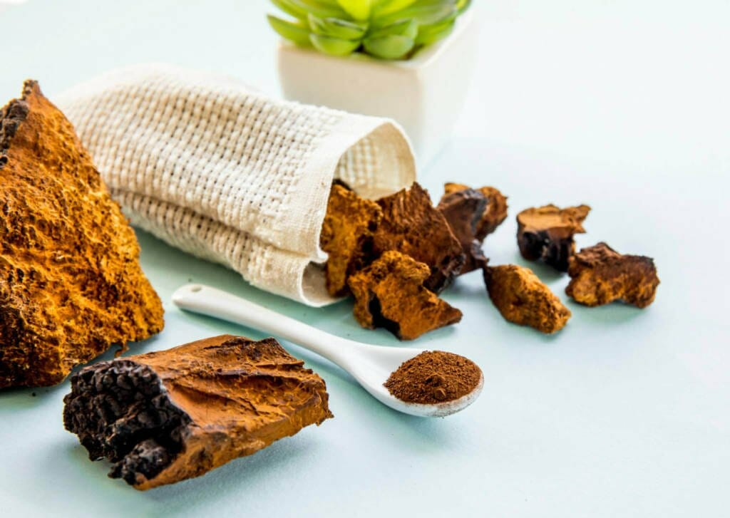 Chaga mushroom Supplements for Cancer Treatment and genetic Risk