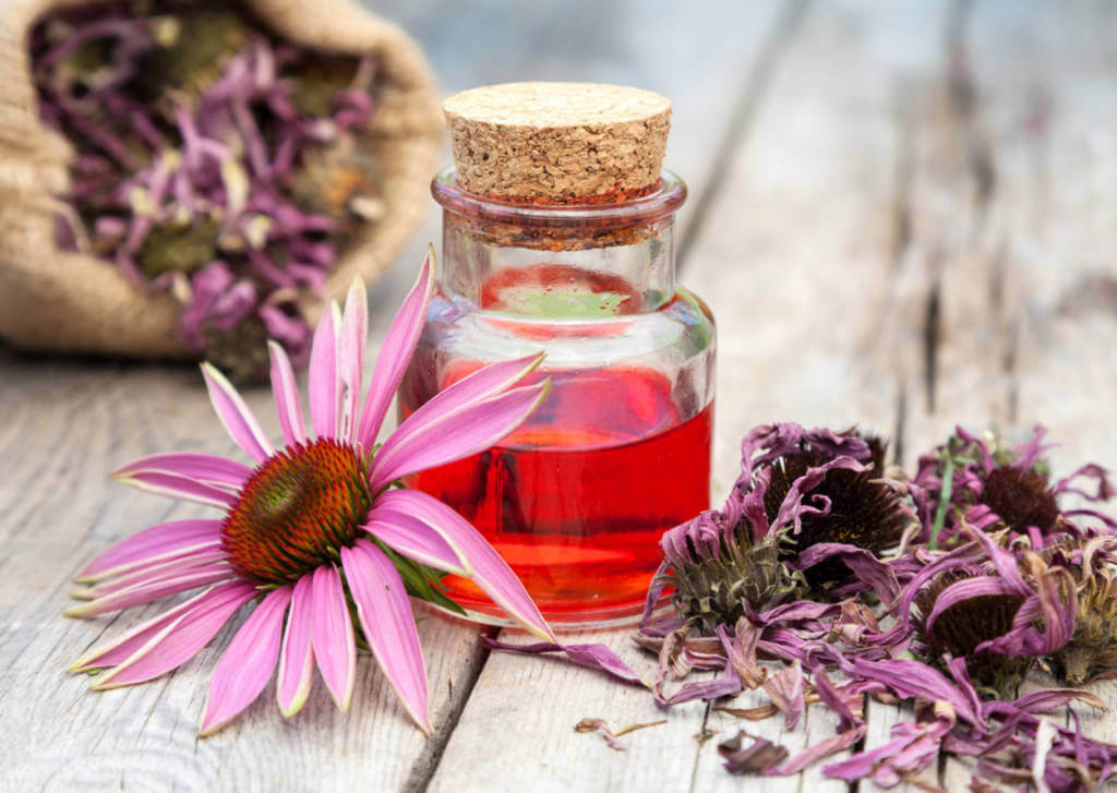 Echinacea Supplements for Cancer Treatment and genetic Risk