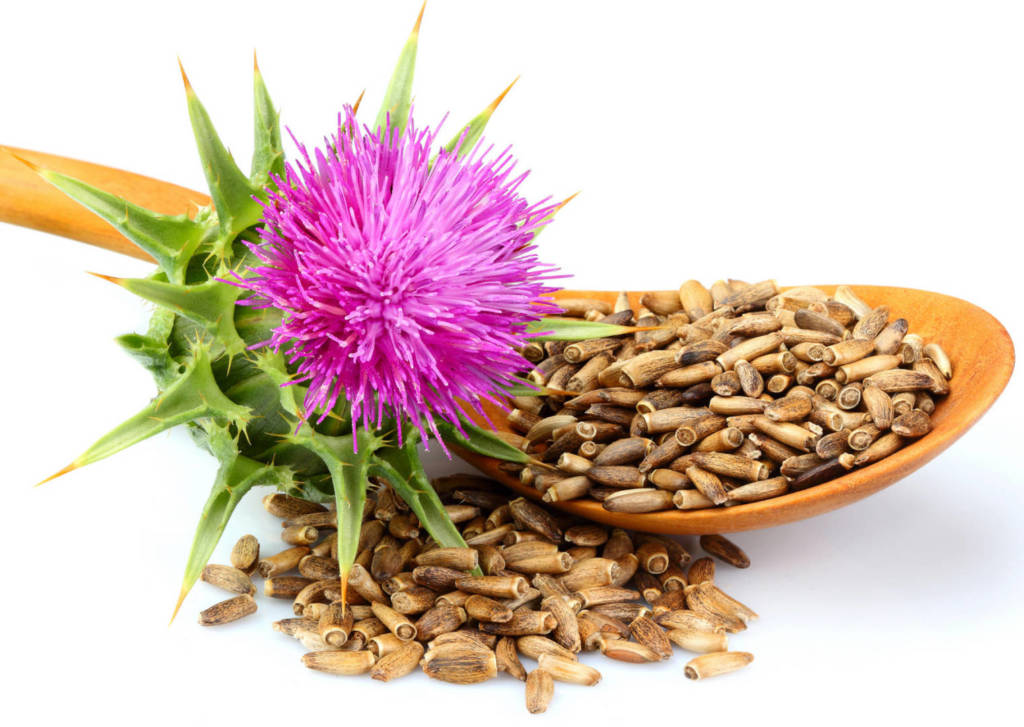Milk Thistle Supplements for Cancer Treatment and genetic Risk