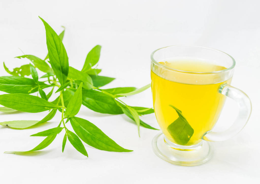 Andrographis Supplements for Cancer Treatment and Genetic Risk