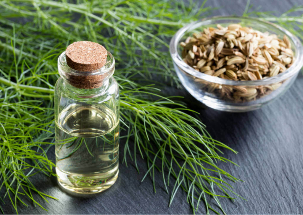 Fennel Supplements for Cancer Treatment and Genetic Risk