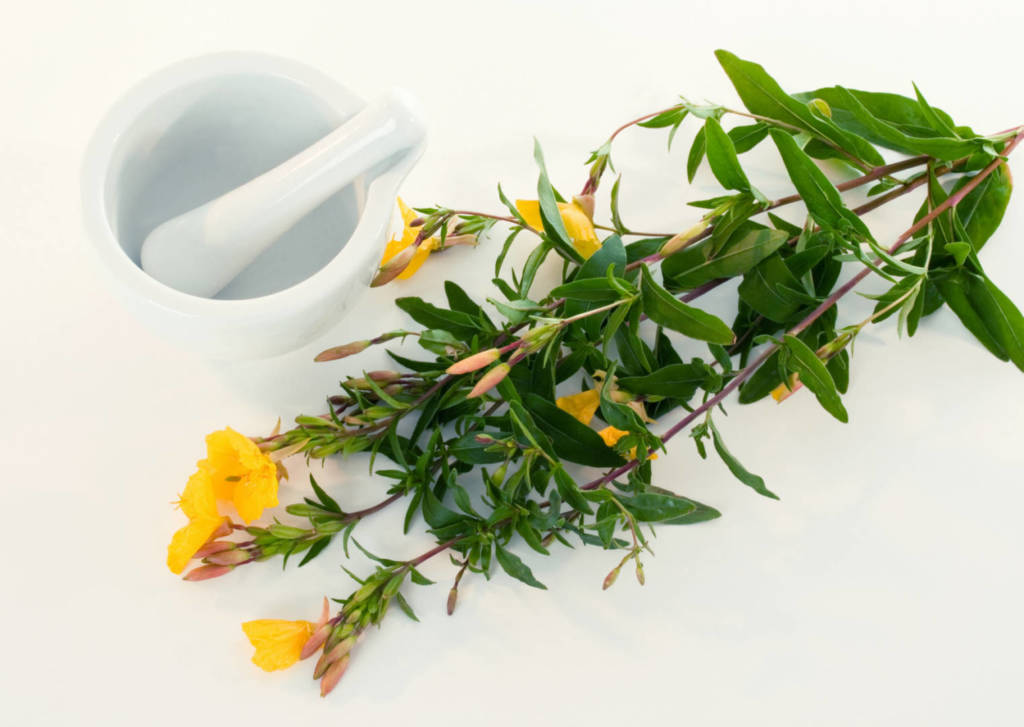 Gamma-linolenic Acid Supplements for Cancer Treatment and Genetic Risk
