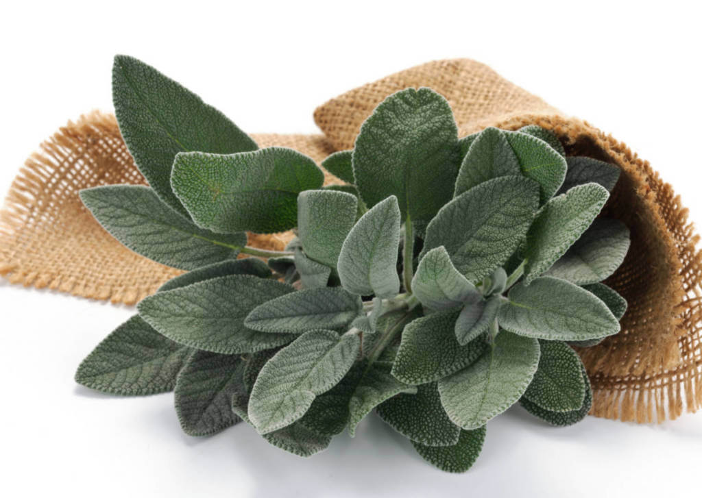 Sage Supplements for Cancer Treatment and Genetic Risk