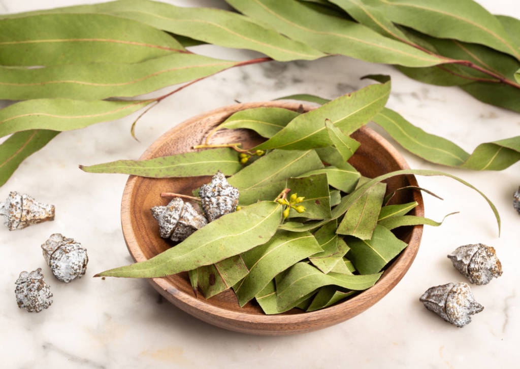 Eucalyptus Supplements for Cancer Treatment and Genetic Risk
