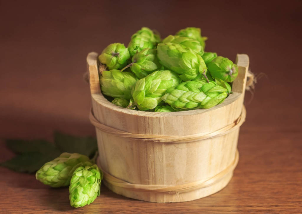 Hops Supplements for Cancer Treatment and Genetic Risk