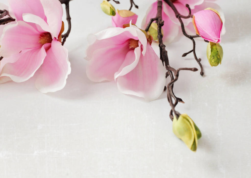 Magnolia Supplements for Cancer Treatment and Genetic Risk