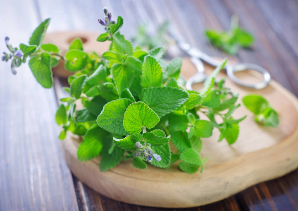 Mint Supplements for Cancer Treatment and Genetic Risk