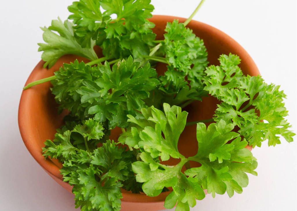 Parsley Supplements for Cancer Treatment and genetic Risk