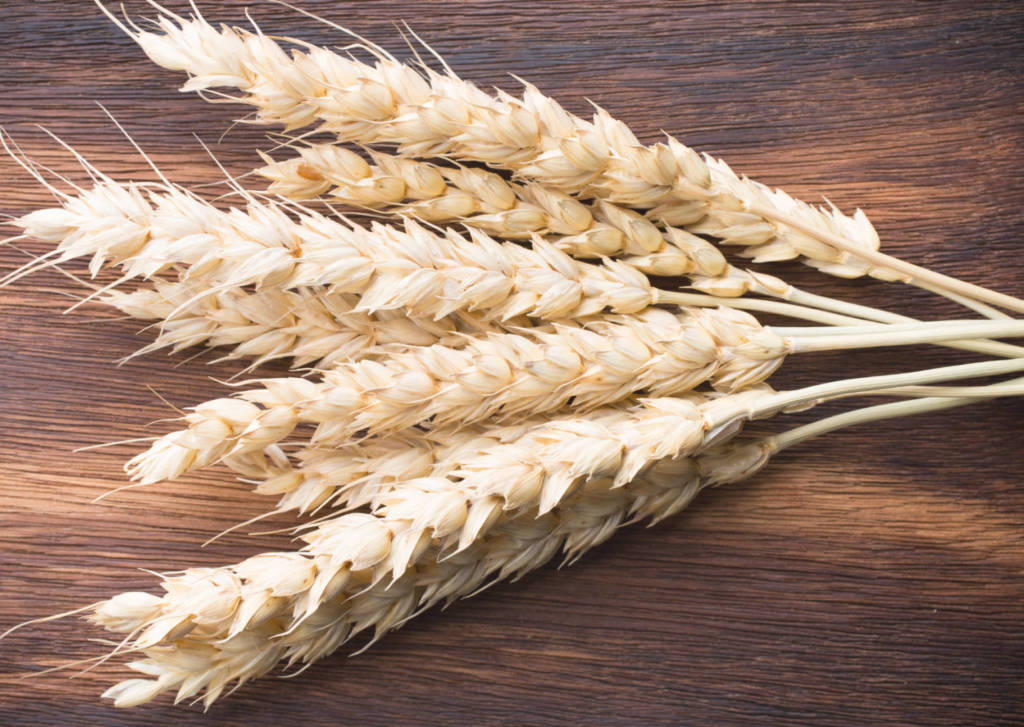 Rye Supplements for Cancer Treatment and Genetic Risk