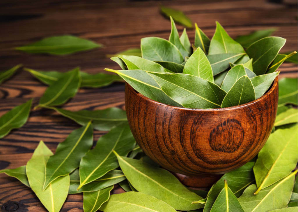 Laurel Supplements for Cancer Treatment and Genetic Risk