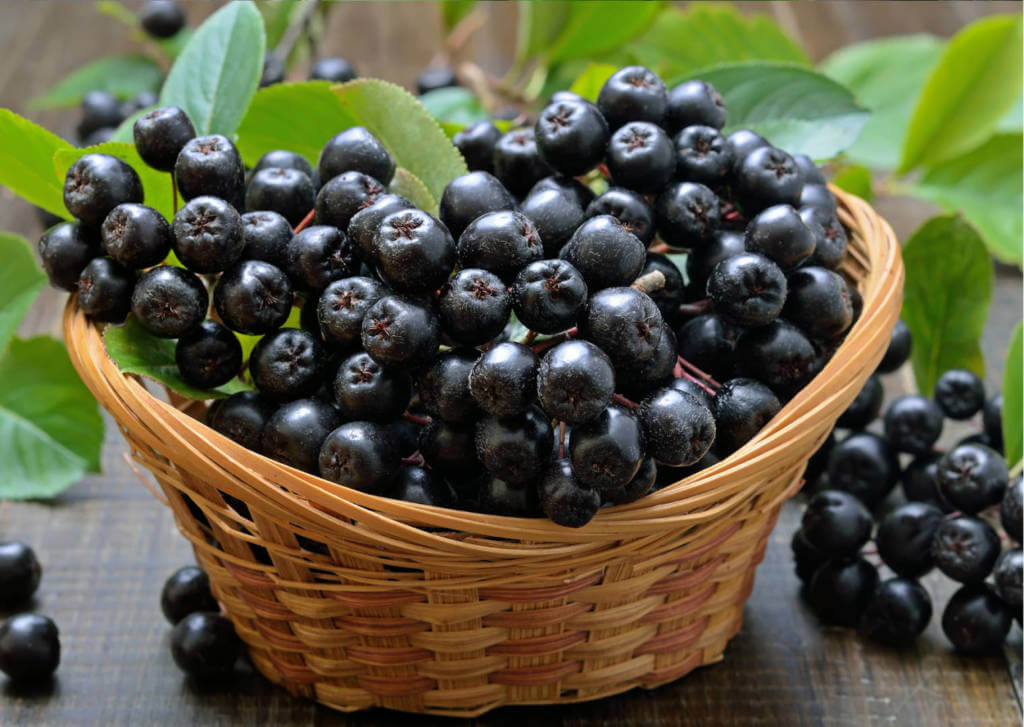 Diet for NOTCH+ Lip and Oral Cavity Cancer