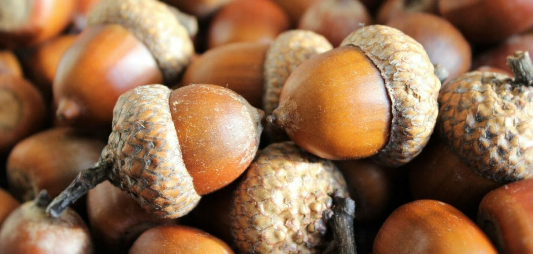 Acorn for Cancer Treatment and Genetic Risk